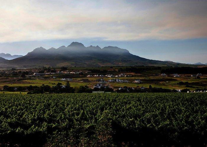 Stellenbosch Greeting Card featuring the photograph Stellenbosch Vineyard by Dale Halbur