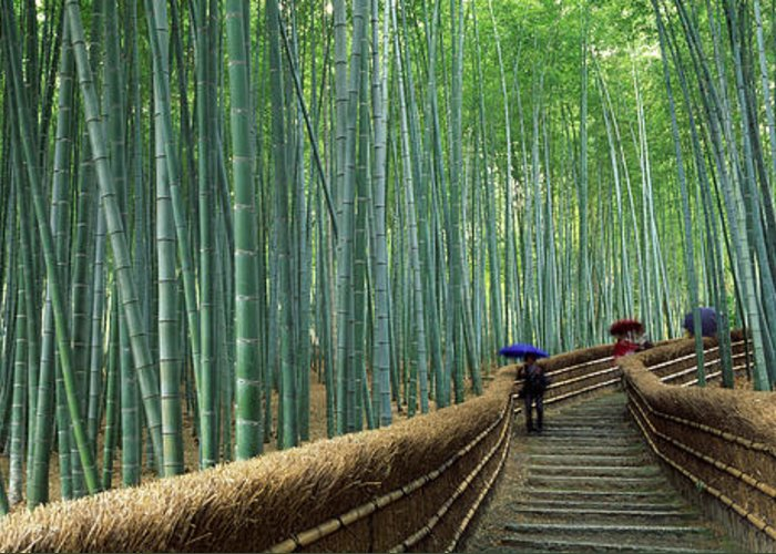 Arashiyama Greeting Cards