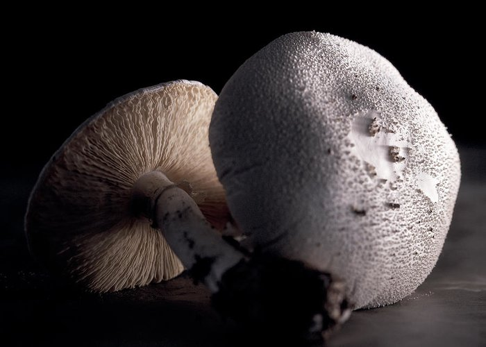 Nature Greeting Card featuring the photograph Still Life Two Mushrooms by Mark Wagoner