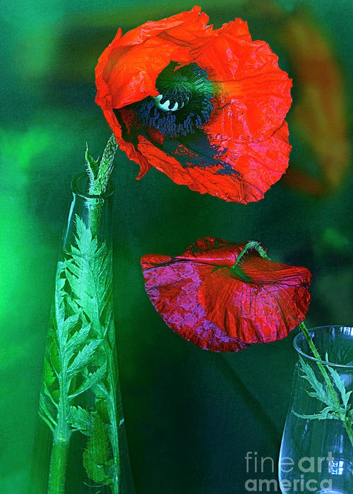 Red Poppy Greeting Card featuring the photograph Still Life With Poppies. by Alexander Vinogradov