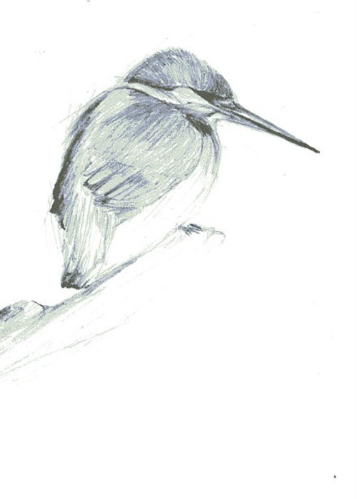 A Kingfisher Waiting For Prey- Pencil Drawing Greeting Card featuring the drawing Still by Mui-Joo Wee