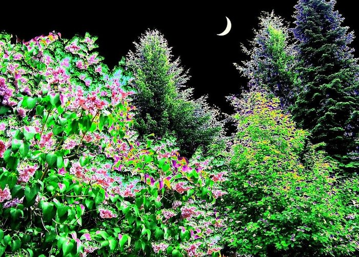 Photo Design Greeting Card featuring the digital art Still Of The Night by Will Borden