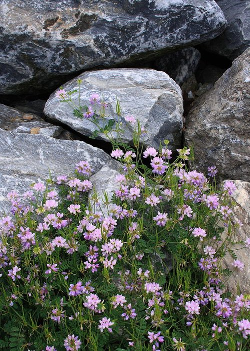 Landscape Greeting Card featuring the photograph Stone Flowers Pink by Doug Mills