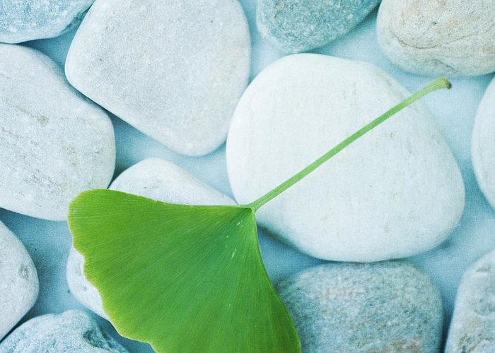 Priska Wettstein Greeting Card featuring the photograph Stones And A Gingko Leaf by Priska Wettstein