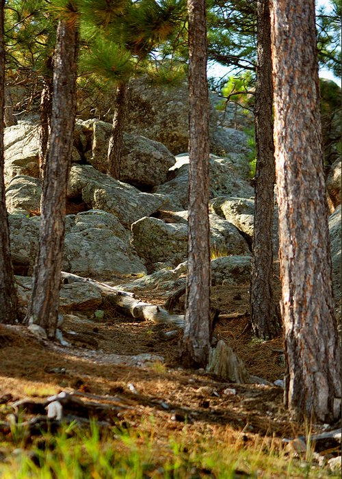 Attraction Greeting Card featuring the photograph Stones And Trees by Mike Oistad