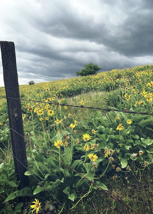 Countryside Greeting Card featuring the photograph Storm Brewing by Melissa Wester