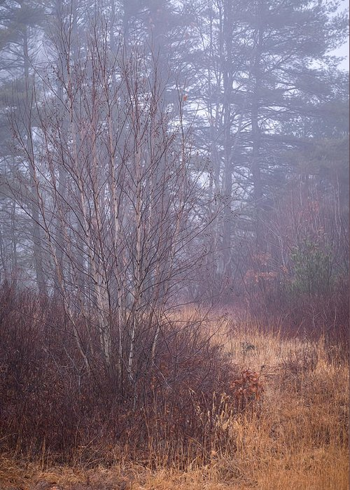 Fog Greeting Card featuring the photograph Straw Path by Diane Moore