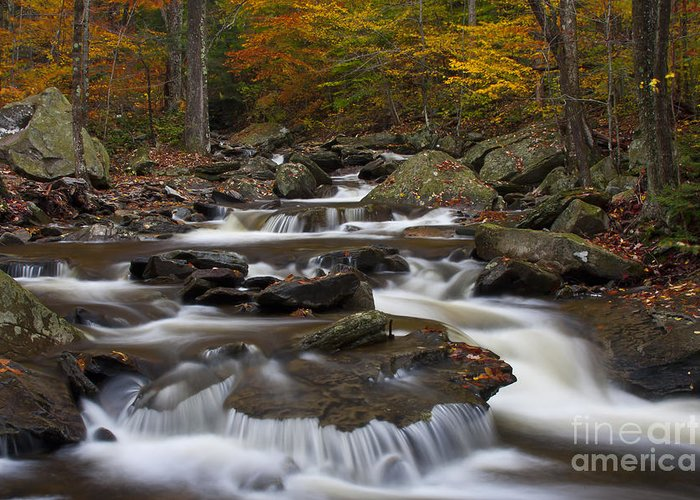 Autumn Greeting Card featuring the photograph Stream At Ricketts Glen by Robert Wirth