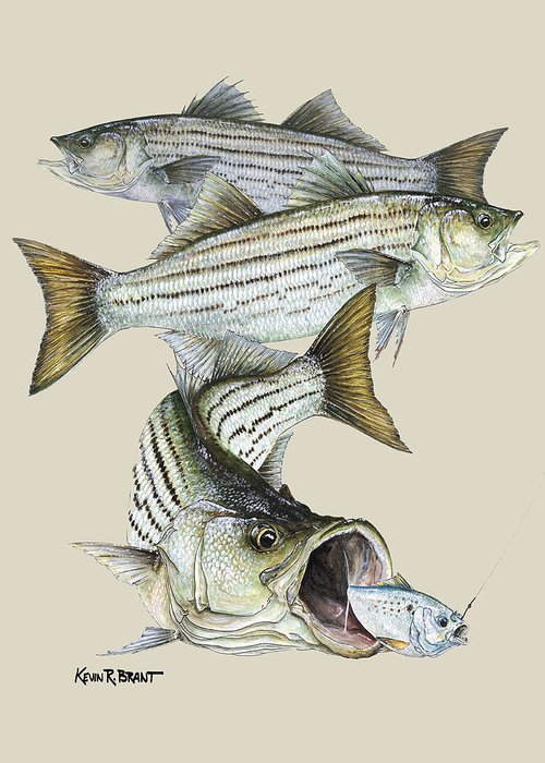 Bass Greeting Card featuring the painting Striped Bass by Kevin Brant
