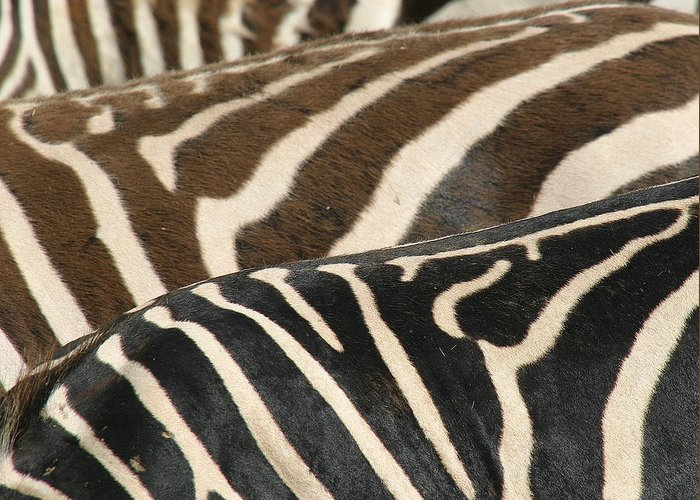 Zebra Greeting Card featuring the photograph Stripes by Donald Tusa
