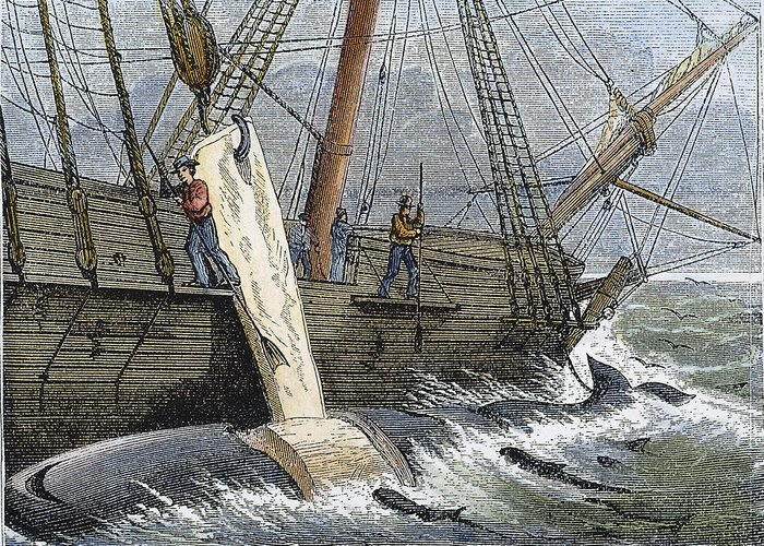 1874 Greeting Card featuring the photograph Stripping Whale Blubber by Granger