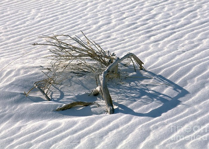 White Sands Greeting Card featuring the photograph Struggle To Survive by Sandra Bronstein