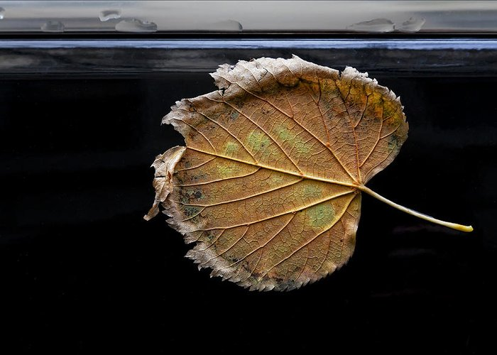 Leaf Greeting Card featuring the photograph Stuck On You by Robert Ullmann