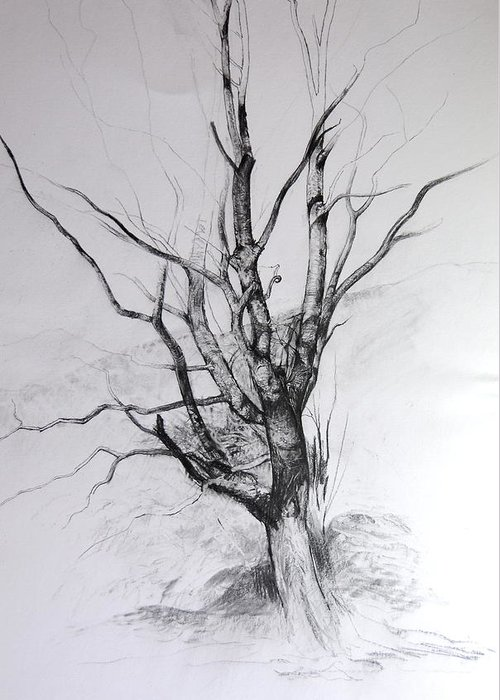 Landscape Greeting Card featuring the drawing Study Of A Tree by Harry Robertson