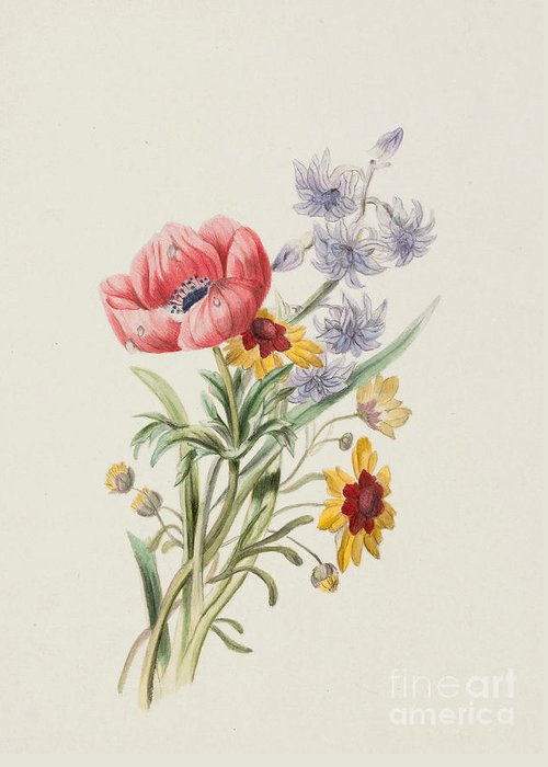 Study Of Wild Flowers Greeting Card featuring the painting Study Of Wild Flowers by English School