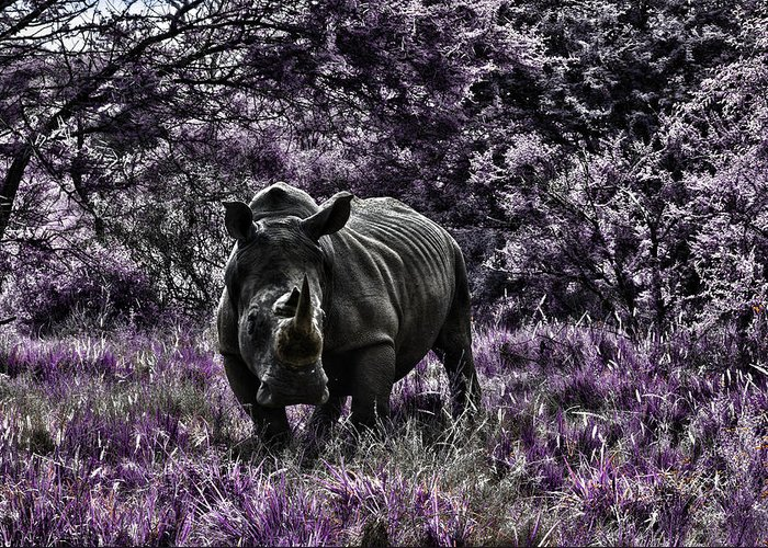 Rhino Greeting Card featuring the photograph Styled Environment-the Modern Trendy Rhino by Douglas Barnard