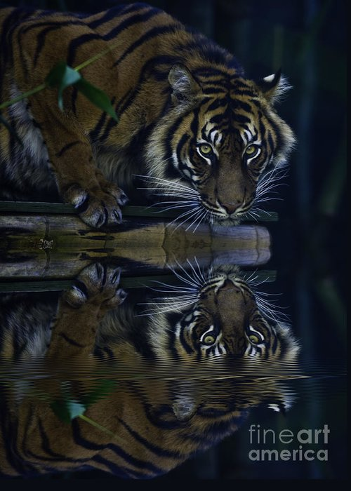 Sumatran Tiger Greeting Card featuring the photograph Sumatran Tiger Reflection by Sheila Smart Fine Art Photography