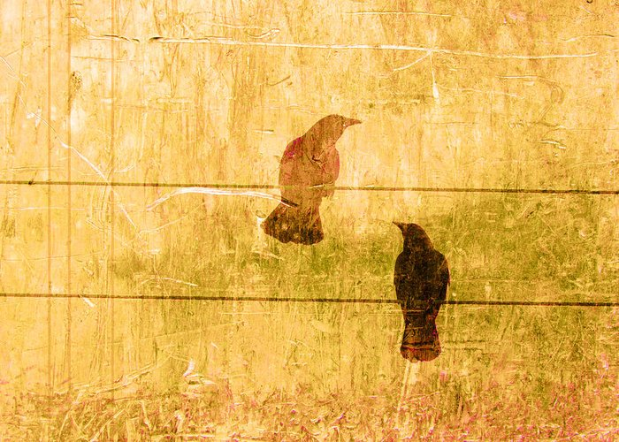 Summer Greeting Card featuring the photograph Summer Crows by Carol Leigh