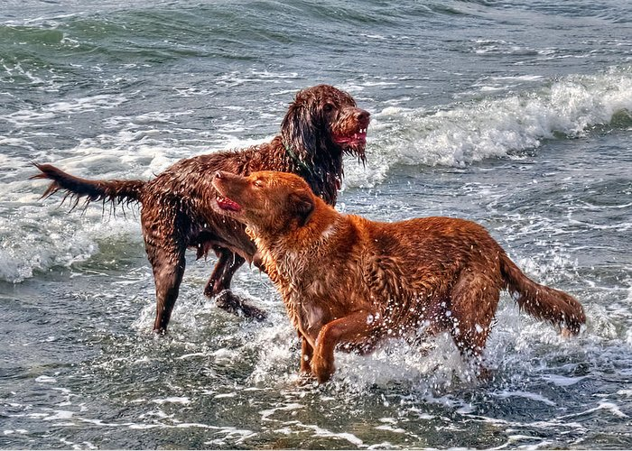 Dog Greeting Card featuring the photograph Summer Fun by Greg Hjellen