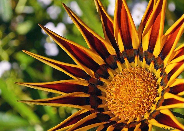 Summer Greeting Card featuring the photograph Summer Garden by Shanna Hyatt