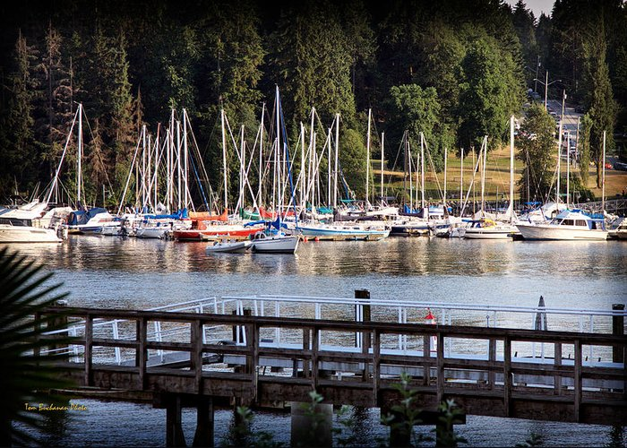 Deep Cove Greeting Card featuring the photograph Summer In Deep Cove by Tom Buchanan