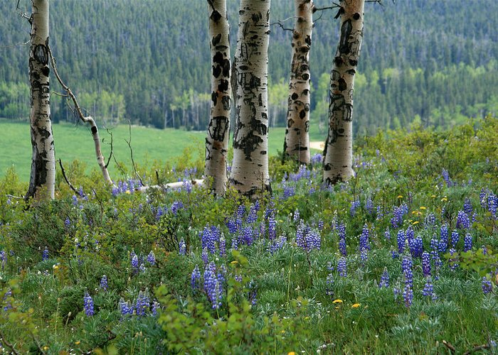 Landscape Greeting Card featuring the photograph Summer In The Bighorns by MH Ramona Swift