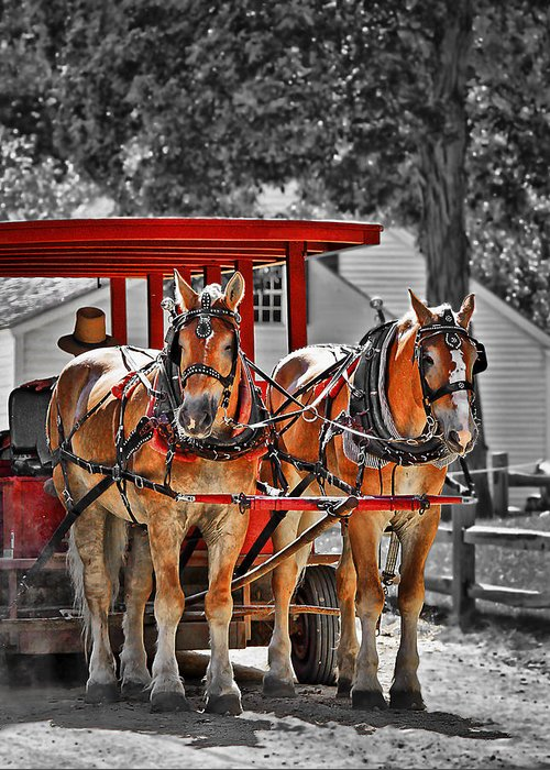 Carriage Greeting Cards