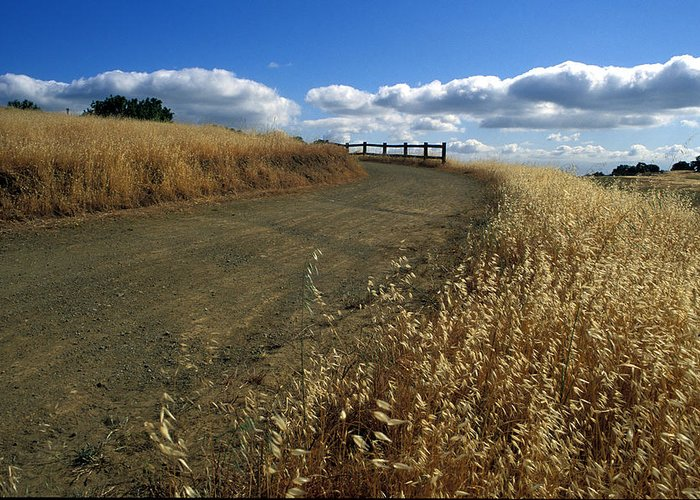 Landscape Greeting Card featuring the photograph Summer Road by Kathy Yates