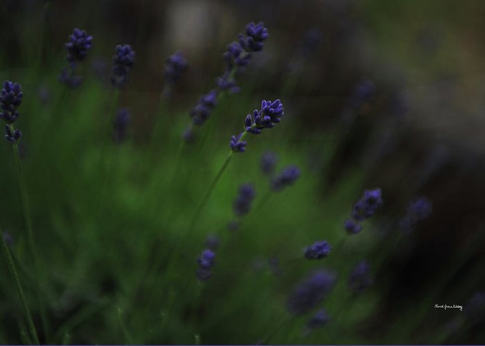 Landscape Greeting Card featuring the photograph Summer Scent Of Lavender by Randi Grace Nilsberg