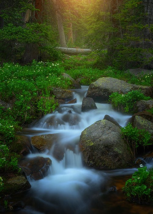 Stream Greeting Card featuring the photograph Summer Stream by Darren White
