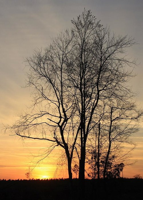 Sunset Greeting Card featuring the photograph Summer's Eve by Dana Blalock