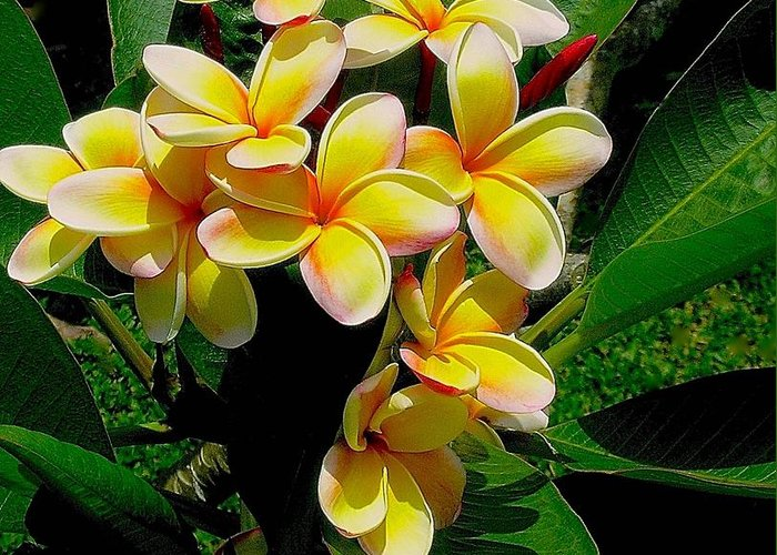 Summertime In Hawaii Greeting Card featuring the photograph Summertime In Hawaii by James Temple
