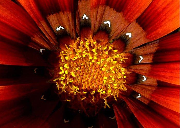 Flower Greeting Card featuring the photograph Sun In The Garden by JoAnn SkyWatcher
