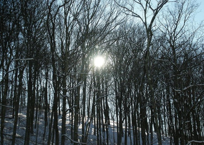 Sun Greeting Card featuring the photograph Sun Through The Trees by Martie DAndrea