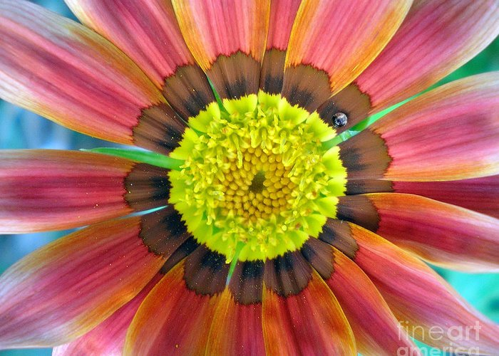 Photography Greeting Card featuring the photograph Sunburst by Heather S Huston