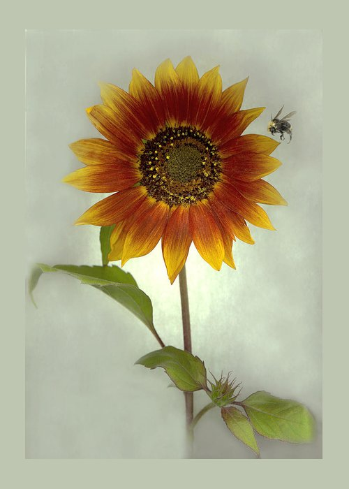 Sunflower Greeting Card featuring the mixed media Sunflower and Bee by Sandi F Hutchins