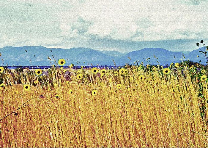 Fields Greeting Card featuring the photograph Sunflower Field 2 by Steve Ohlsen