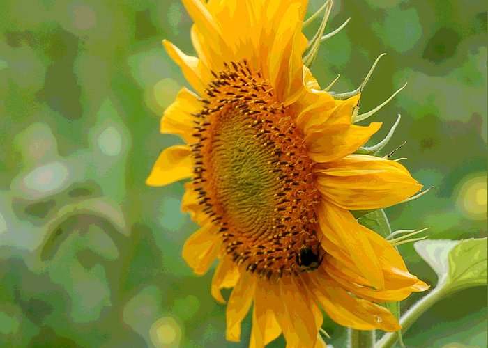 Sunflower Greeting Card featuring the photograph Sunflower Fun by Suzanne Gaff