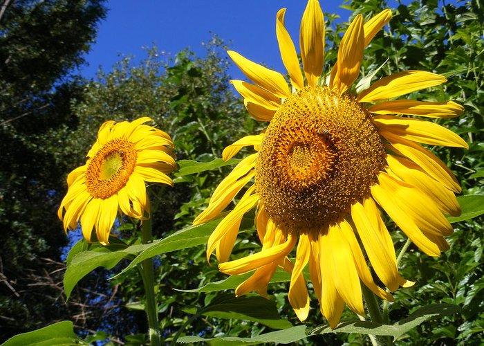 Sunflowers Greeting Card featuring the photograph Sunflower Garden by Gail Salitui