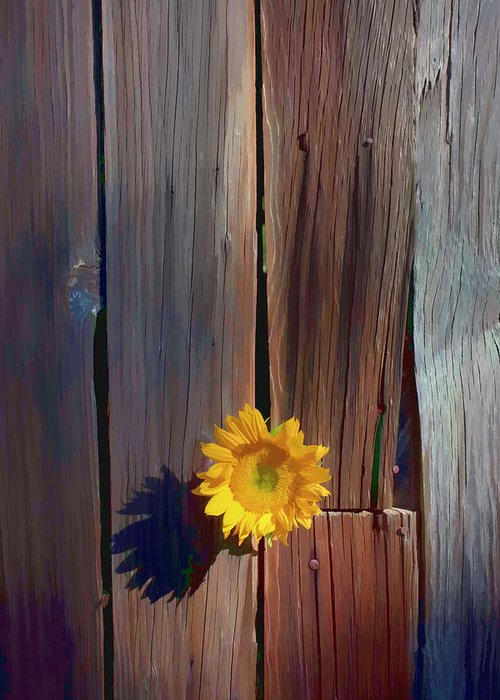Sunflowers Together Sunflower Greeting Card featuring the photograph Sunflower In Barn Wood by Garry Gay