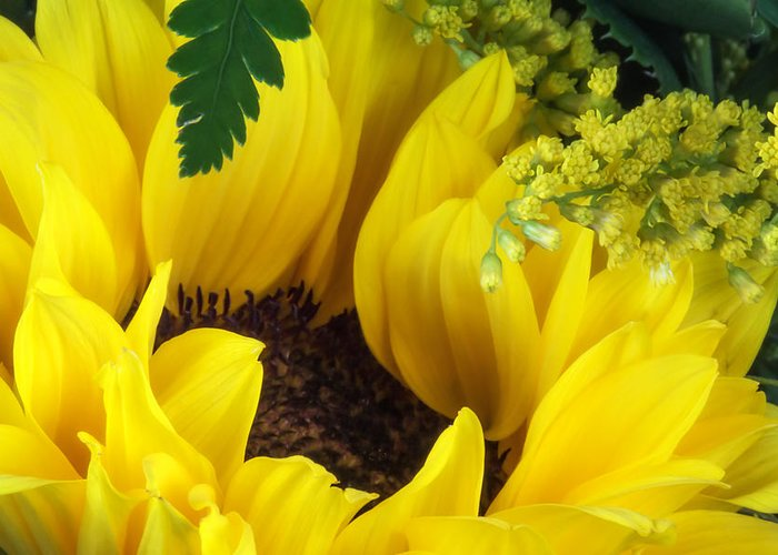 Helianthus Annuus Greeting Cards