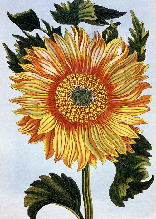Sunburst Floral Still Life Paintings Greeting Cards