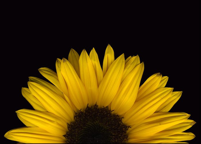 Scanography Greeting Card featuring the photograph Sunflower Rising by Deborah J Humphries