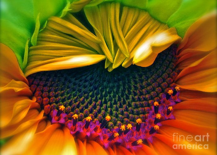 Sunflower Photograph Greeting Card featuring the photograph Sunflower Smoothie by Gwyn Newcombe