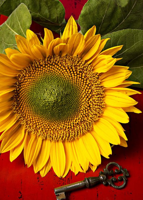 Sunflower Greeting Card featuring the photograph Sunflower With Old Key by Garry Gay