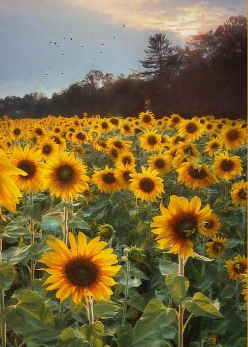 Sunflower Greeting Card featuring the photograph Sunflowers At Sunset by Lori Deiter