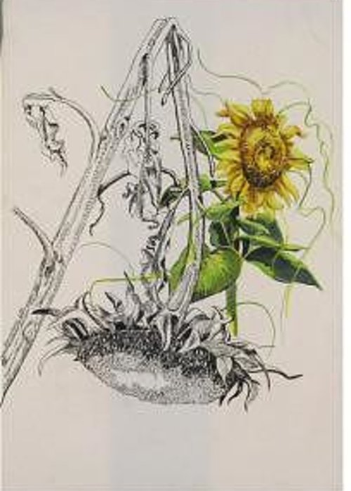 Large Sunflowers Featured Greeting Card featuring the painting Sunflowers by Wanda Dansereau
