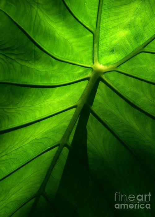 Green Greeting Card featuring the photograph Sunglow Green Leaf by Patricia L Davidson