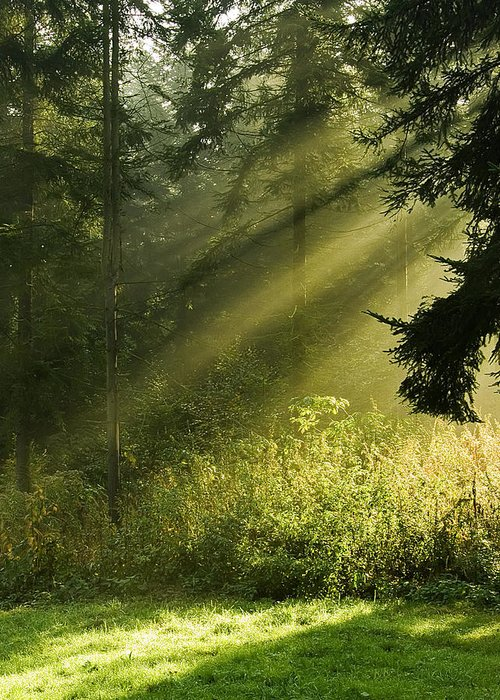 Nature Greeting Card featuring the photograph Sunlight by Daniel Csoka