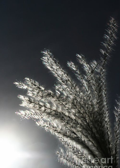 Grass Greeting Card featuring the photograph Sunlight Grass by Steve Augustin